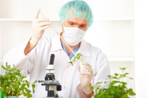 Researcher holding up a GMO plant in the laboratory
